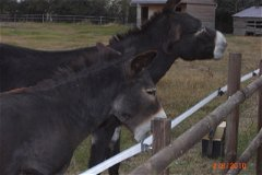 The two donkeys come with the property if you wish!!