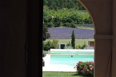 view pool and lavender field