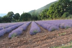 view on lavender field