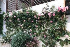 Spectacular Floral Displays