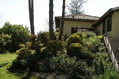 Hillside shrubs