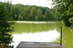 one of the swims
