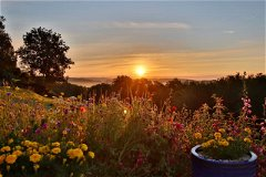 Wonderful sunrises