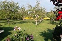 Walnut orchard