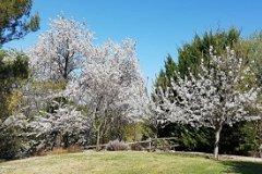 Natural garden area