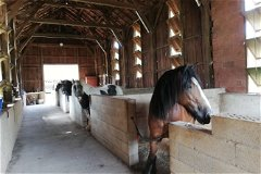 4 large stables