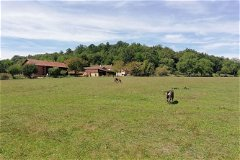 6 hectares of flat pasture