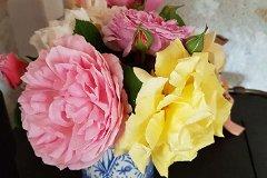 Roses anciennes David Austin de la propriété