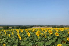 Sunflower Views