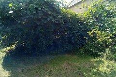 Garden    Kiwi