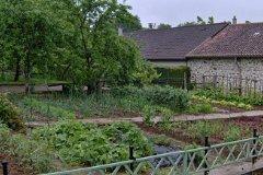 Kitchen garden in summer