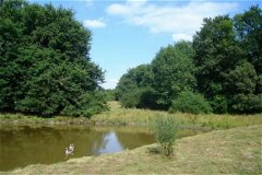 Pond (2)