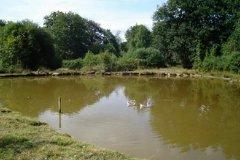 Pond (1)