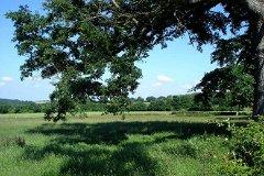 Adjacent fields