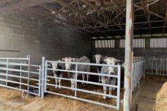 Cattle stalls