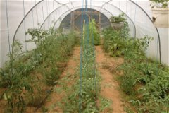 Lots of planting options within this tunnel