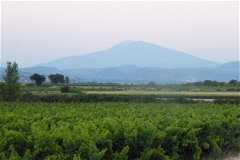 The Mont Ventoux from the vineyard