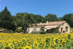 Farmhouse surrounded by sunflowers