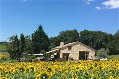 Le Caquet, sunflower fields & woods in the background